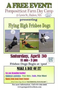 High Flying Frisbee Dogs 2
